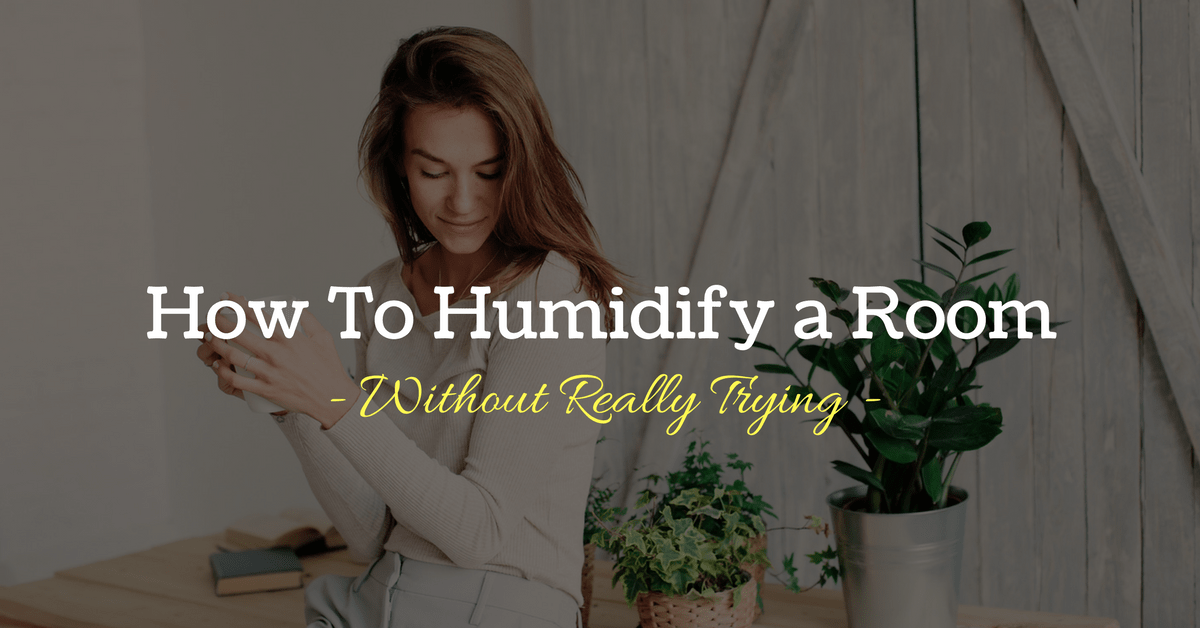 How To Humidify a Room Without Really Trying