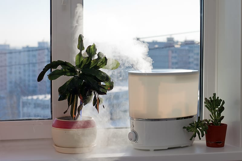 Humidifier for singers
