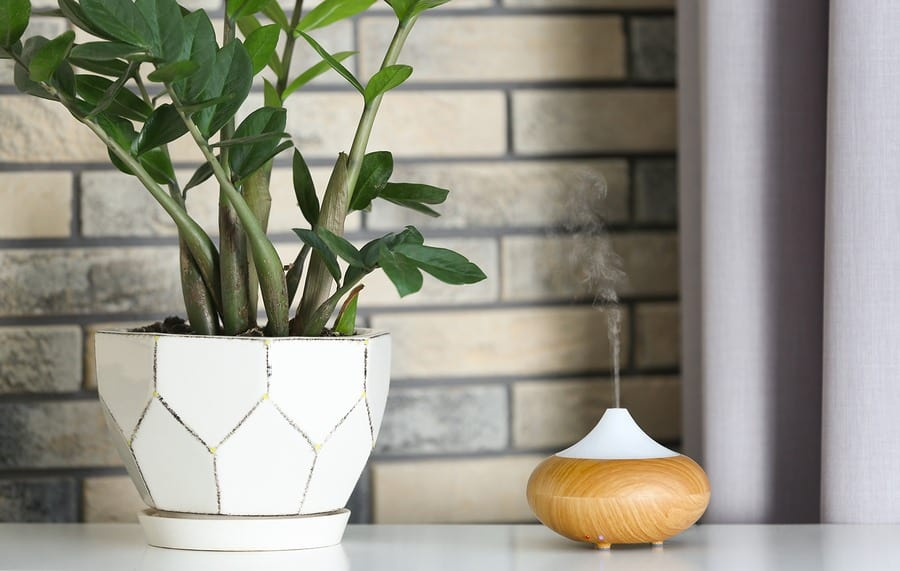 Humidifier Keeps Plants Healthy